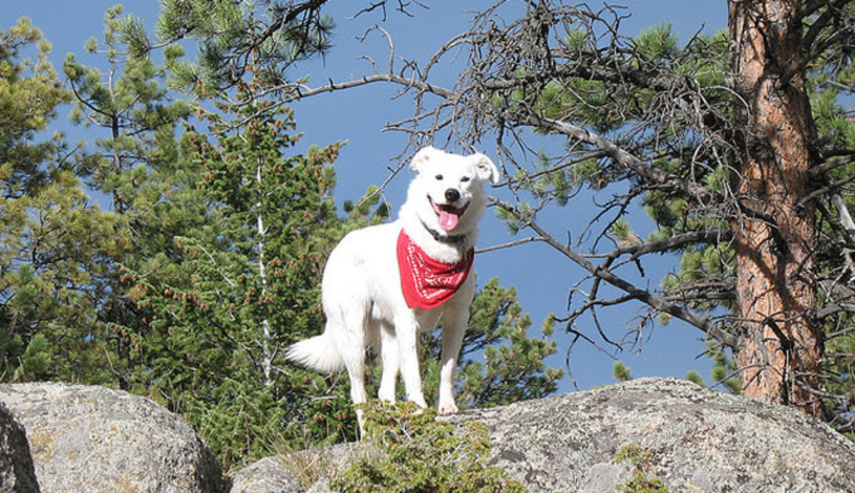 pets-in-yellowstone