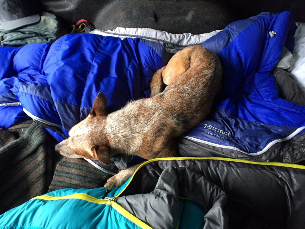 Dog on camping