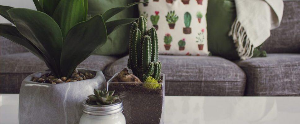 indoor plants on table