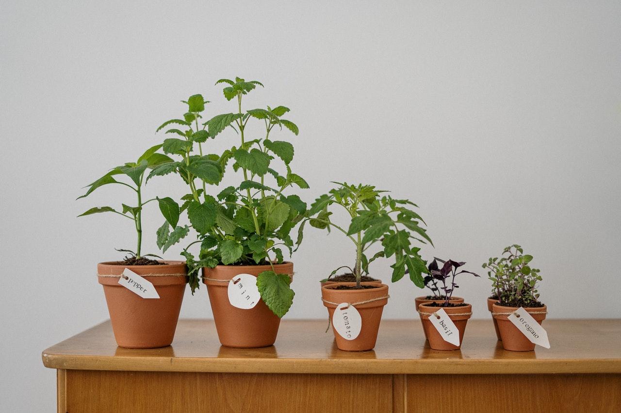 easy to grow garden plants