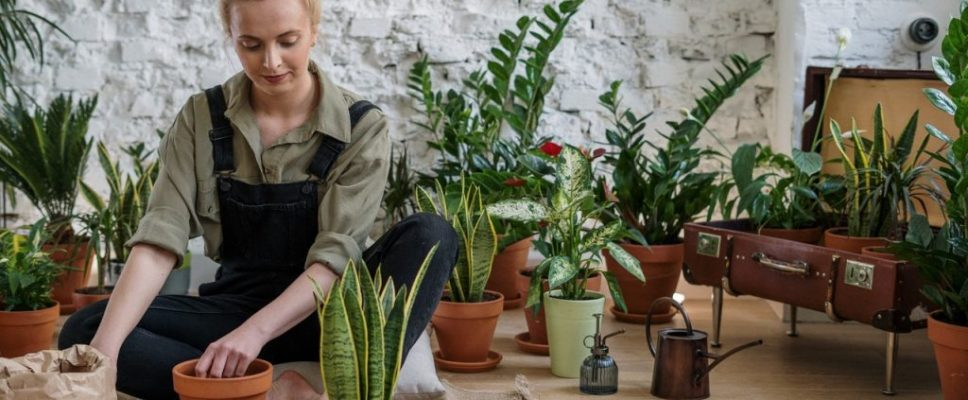 woman planting easy to grow garden plants